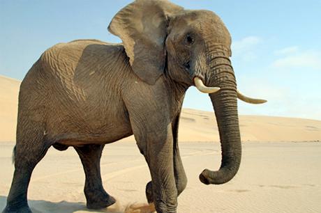 Africa bush sex our mischievous bday bash