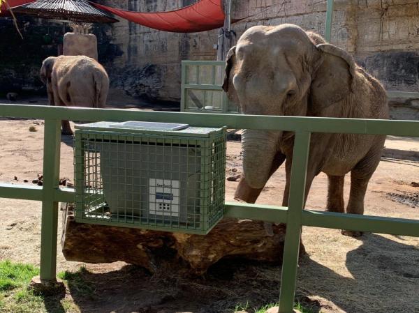 Elephant Automatic Animal feeder