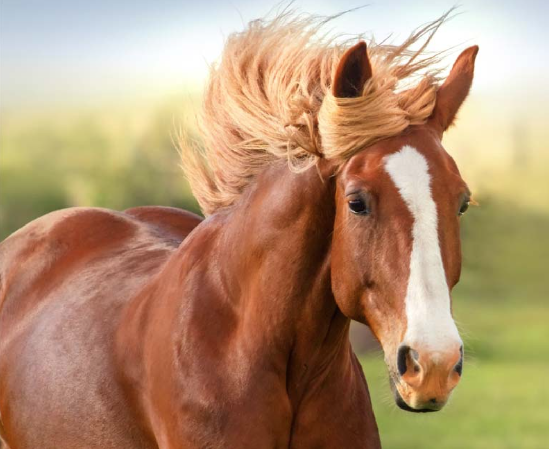 feedpods horse feeder